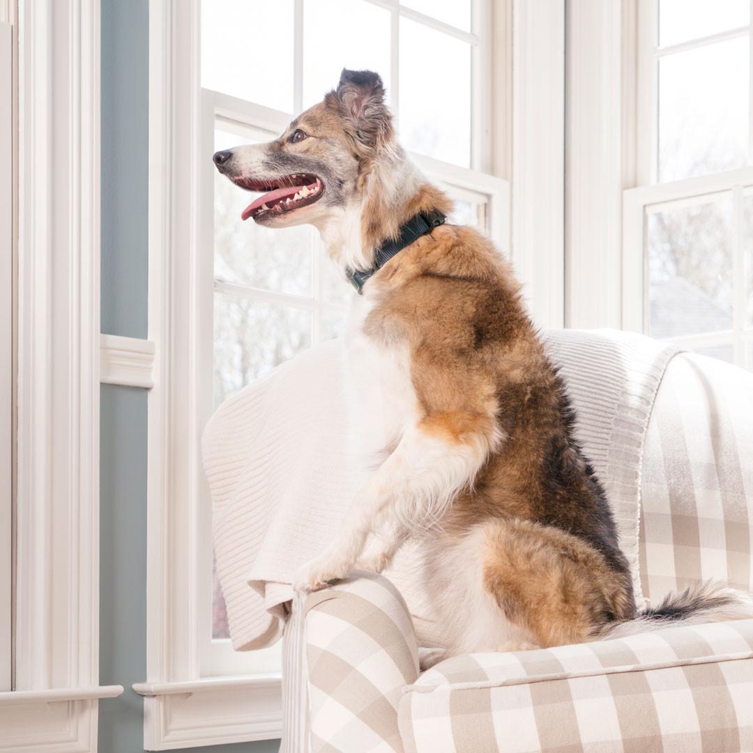 Les nouveaux colliers à spray PetSafe® offrent des solutions innovantes pour l'éducation des chiens