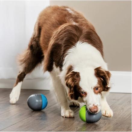 PetSafe® invente le «cache-cache» interactif et connecté pour les chiens