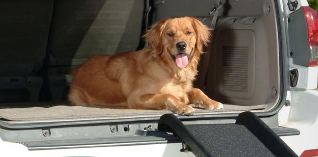Des vacances estivales tout confort et sécurité avec la marque PetSafe®