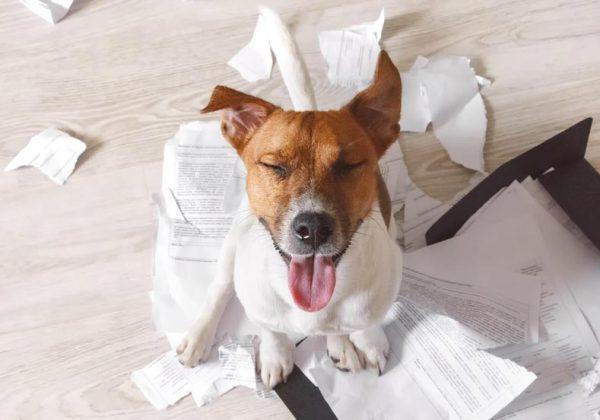 Fin des vacances, la marque PetSafe® aide les propriétaires à préparer la rentrée