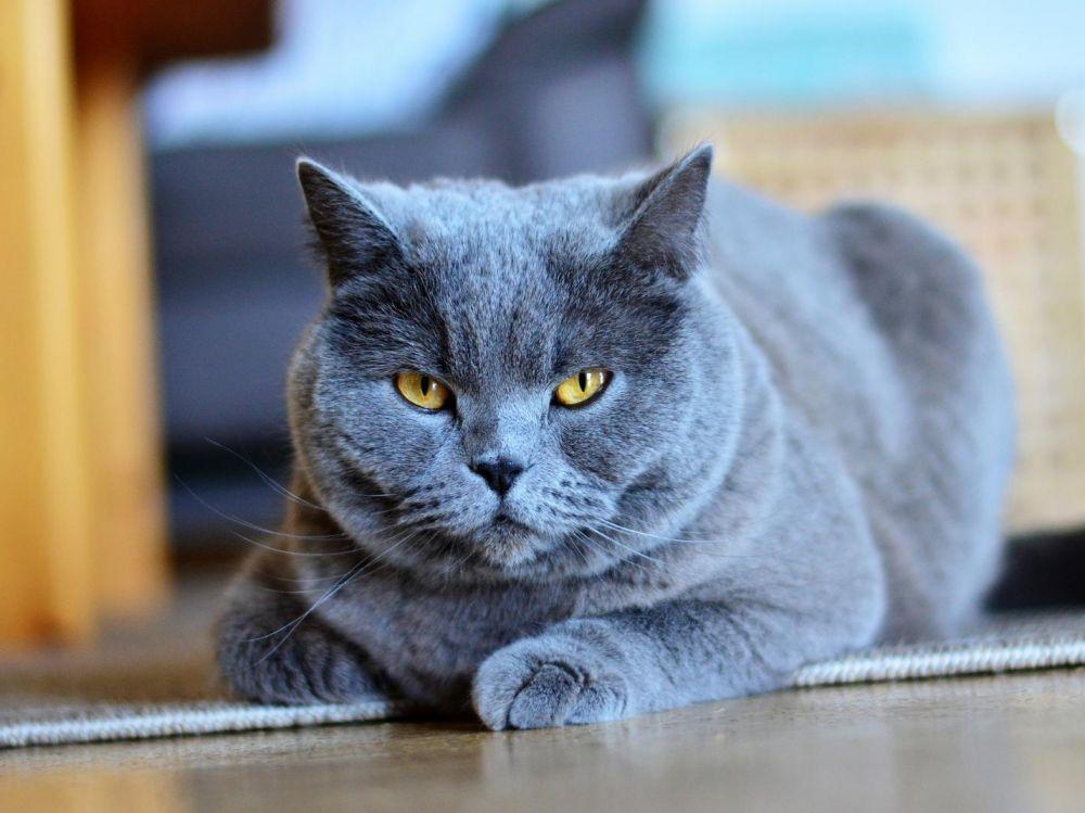 Quel bac à litière choisir ? La marque PetSafe® décline la propreté en trois approches qui répondront aux besoins de chaque chat