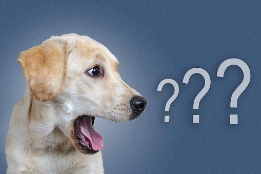 Deux nouvelles références pour la marque PetSafe®
