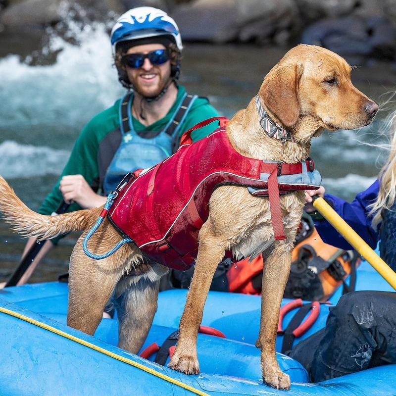 Les sports de plein air se pratiquent avec les chiens grâce à Kurgo®