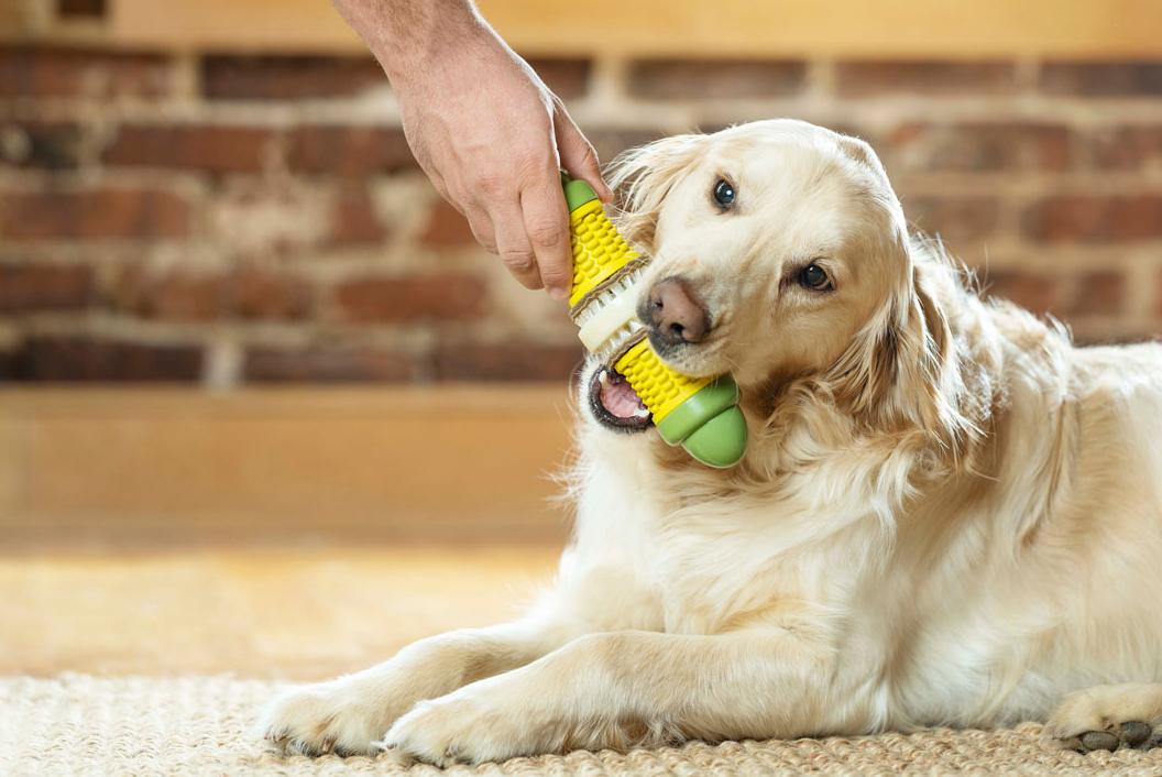 La marque PetSafe® lance une nouvelle gamme de jouets pour chiens et pour chats