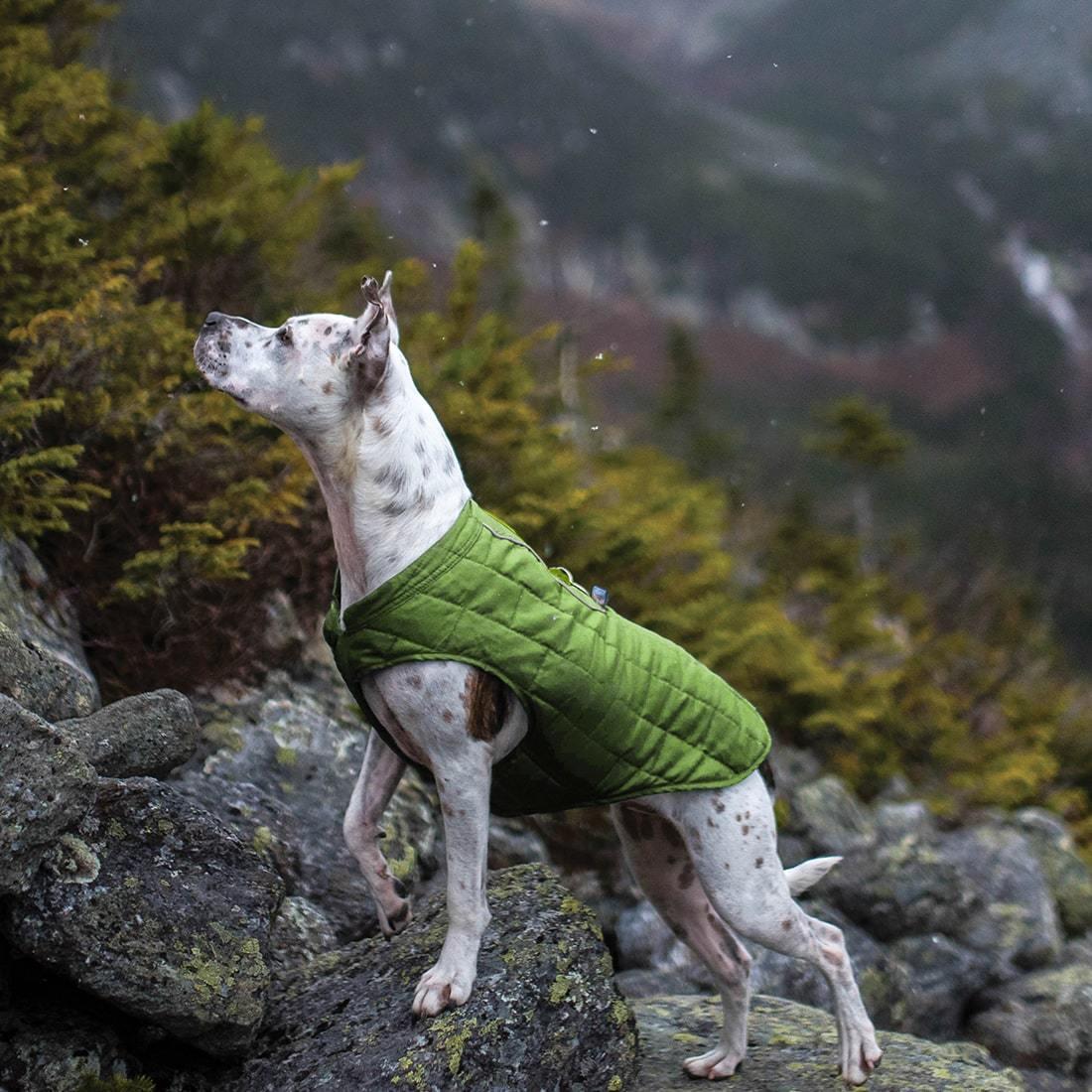Pluie, vent, froid, … Kurgo® présente ses produits incontournables pour poursuivre les activités en plein air